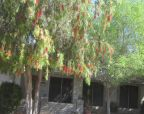 Foreclosed Home in Glendale 85304 W ALTADENA AVE - Property ID: 2628567680